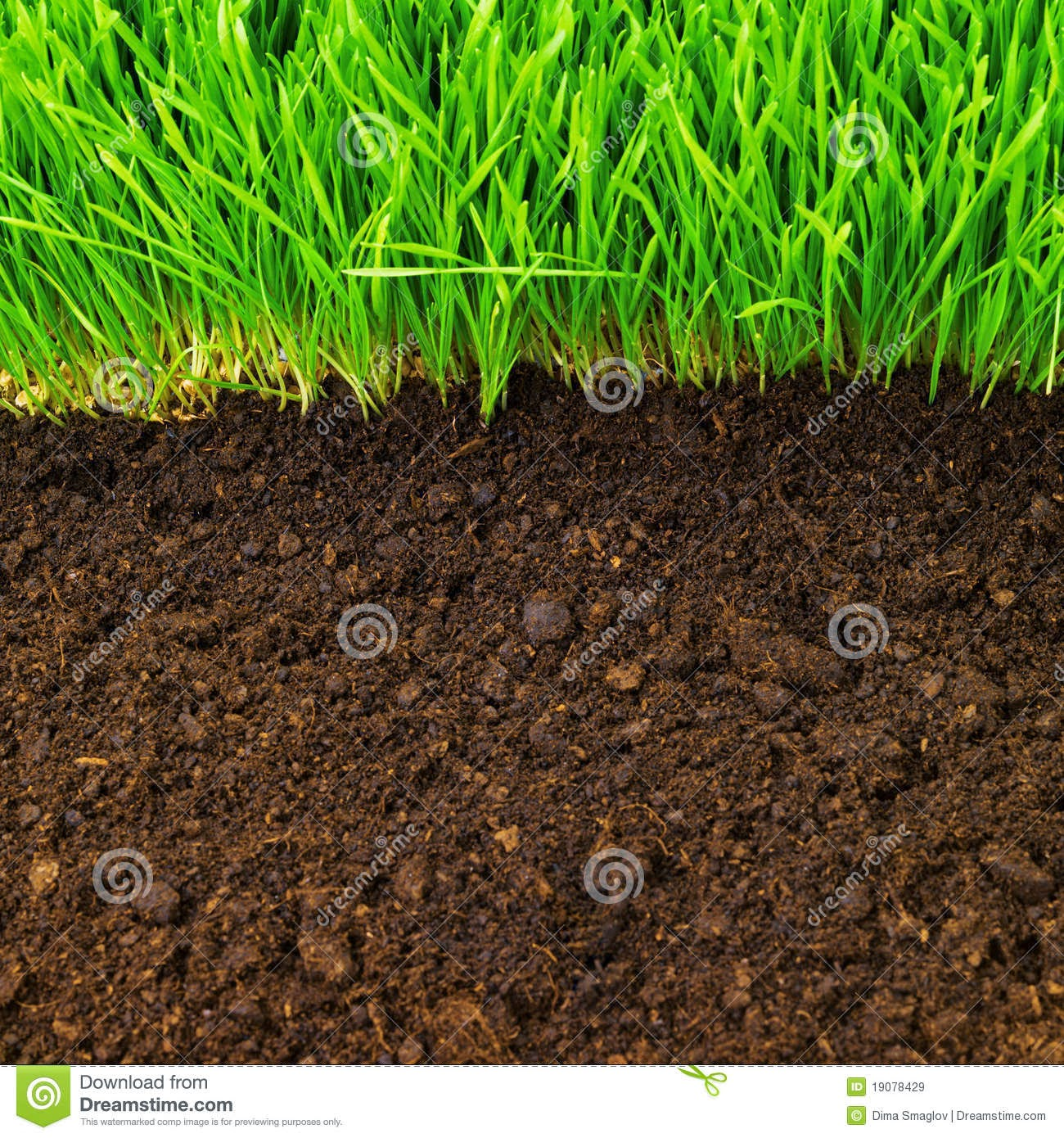 Microorganismos en agricultura microorganismos en el suelo for Como esta constituido el suelo