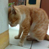 Dosaku Terhadap Kucing Ketika Kecil