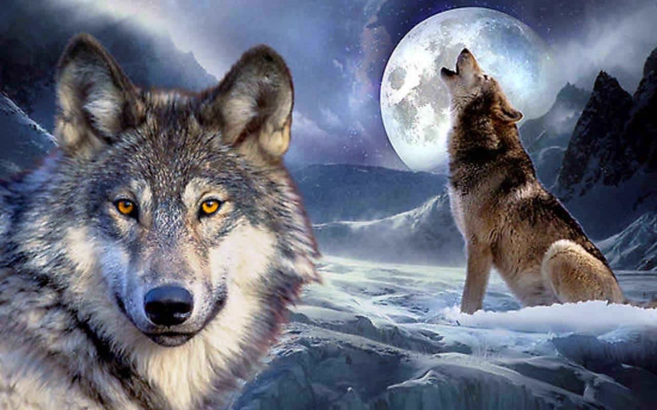wolf computer wallpaper hd - photo #45