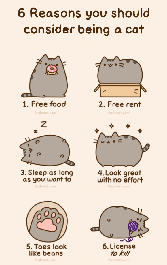 Pusheen The Cat Gangnam Style Images amp Pictures Becuo
