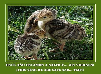 wild turkey chicks