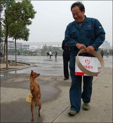Sempoi - Anjing Catwalk..