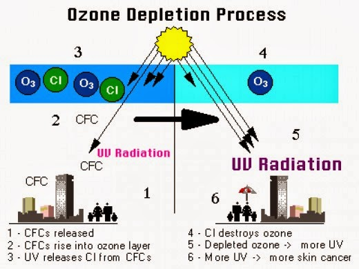 human race contribution to depleting the ozone layer