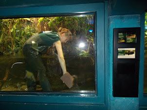 Zoo Employee cleaning the aquarium enclosure.