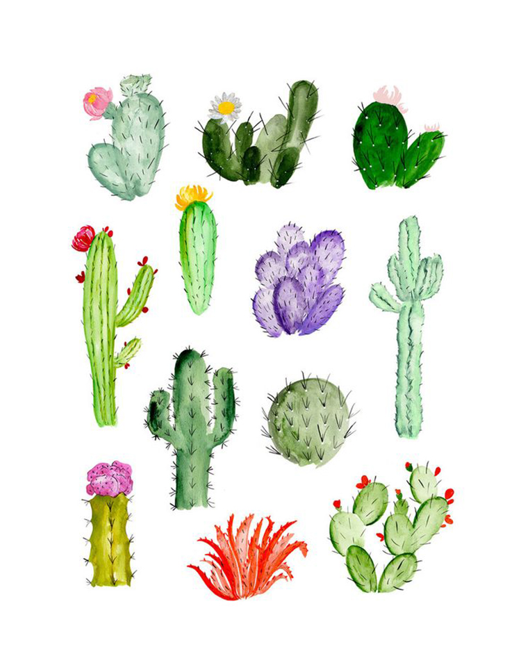 Plants and edible flowers that you can find in Mexico and how to prepare them. - Matador Spanish