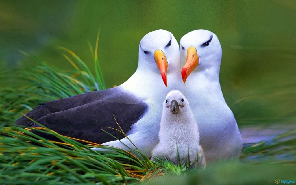 National Audubon Society Birds