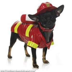 Dog firefighter.