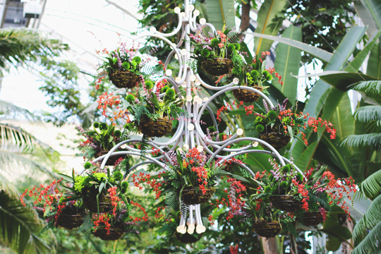 blooming chandelier at United States Botanic Garden