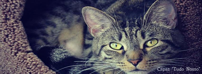 Capa para Facebook - Gato - Tudo Nosso
