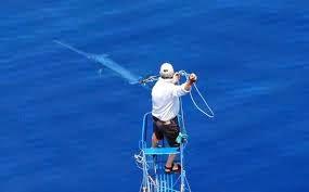 italian swordfish