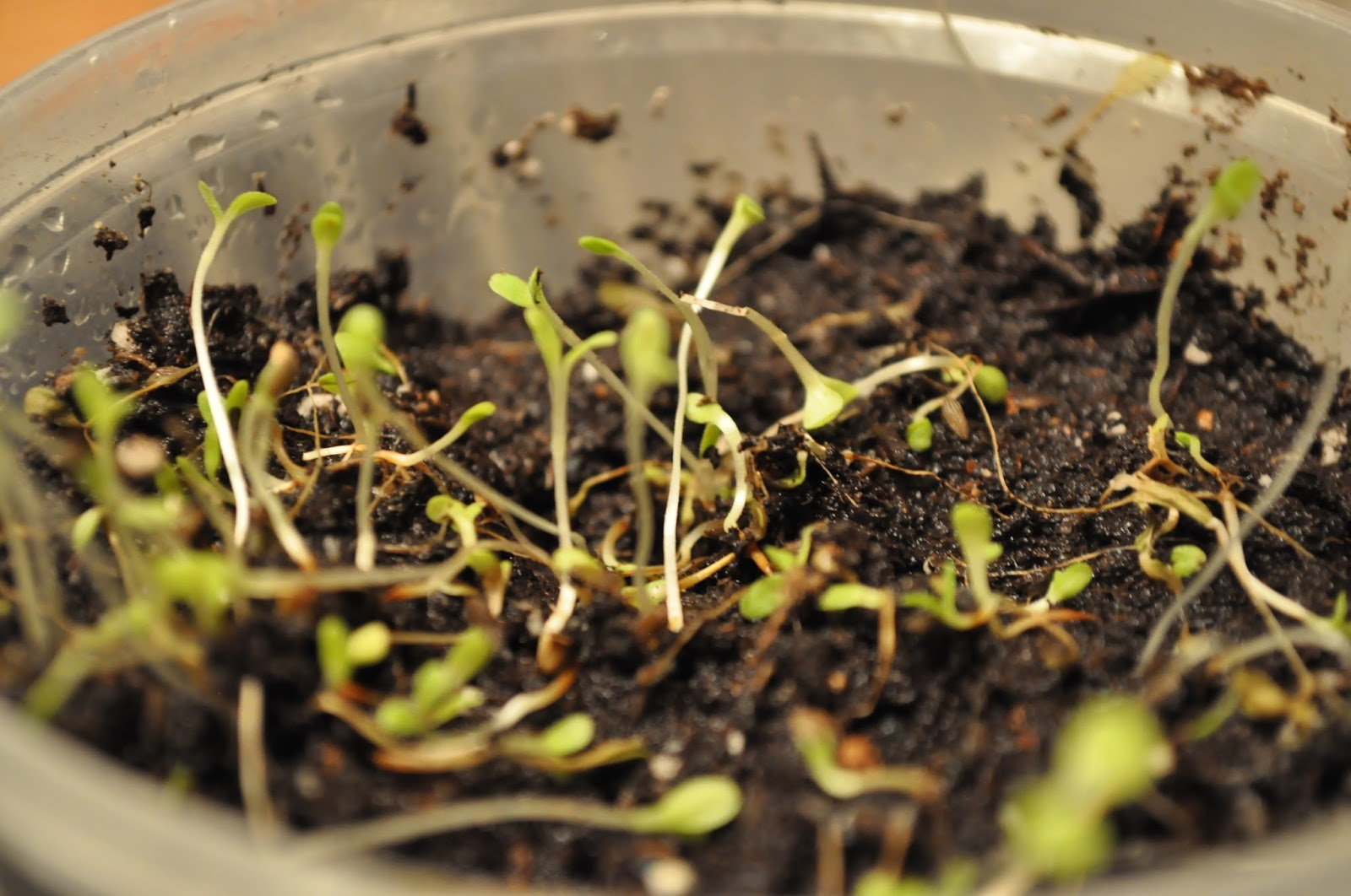 CHILKA\'S CULINARY BLOG: Plant a seed