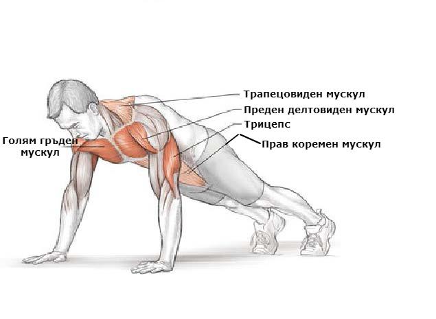 Кои мускули вземат участие при лицевите опори
