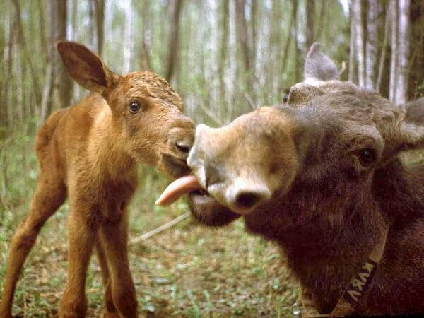 Funny animals of the week - 21 March 2014 (40 pics), funny animal pictures, baby donkey and his mom