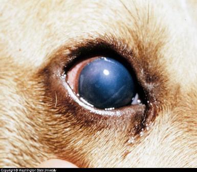 eyelid dermatitis steroid