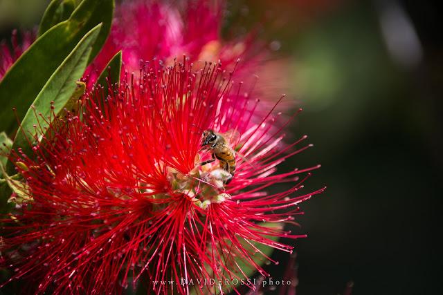 Macro vespa