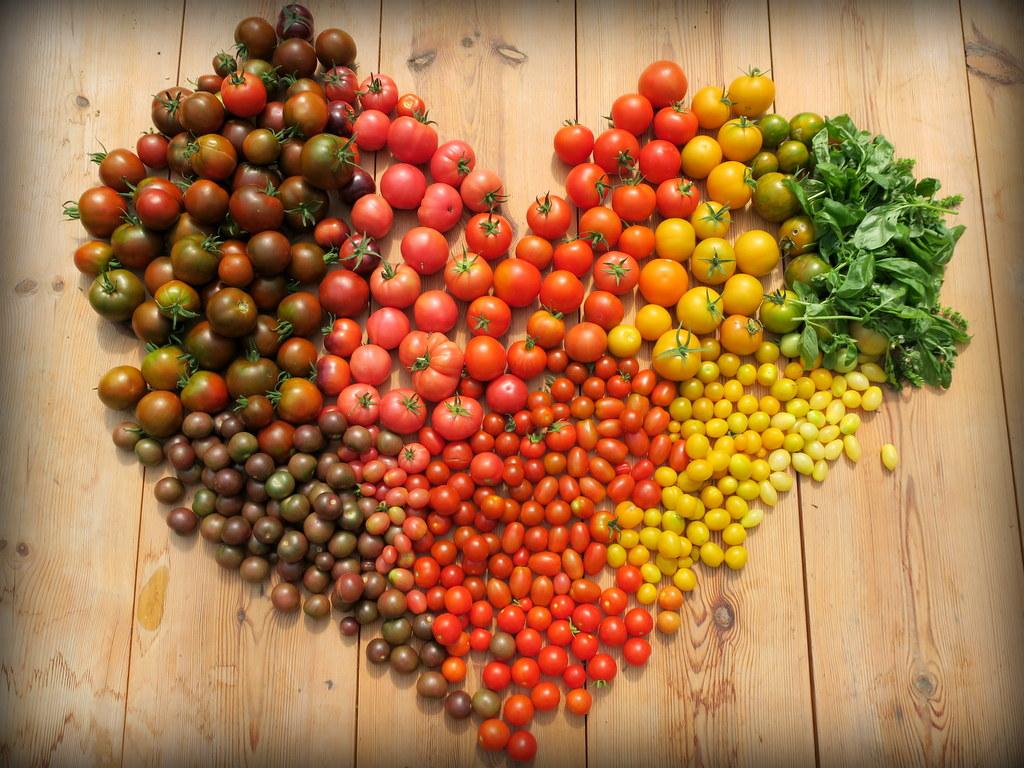 Sadzonki szczepionych pomidorów już dostępne :-)