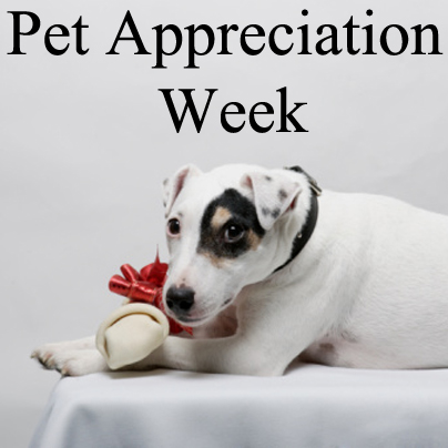 Dog with bow-wrapped bone looking at the camera with the text: Pet appreciation week