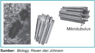 Struktur sentriol