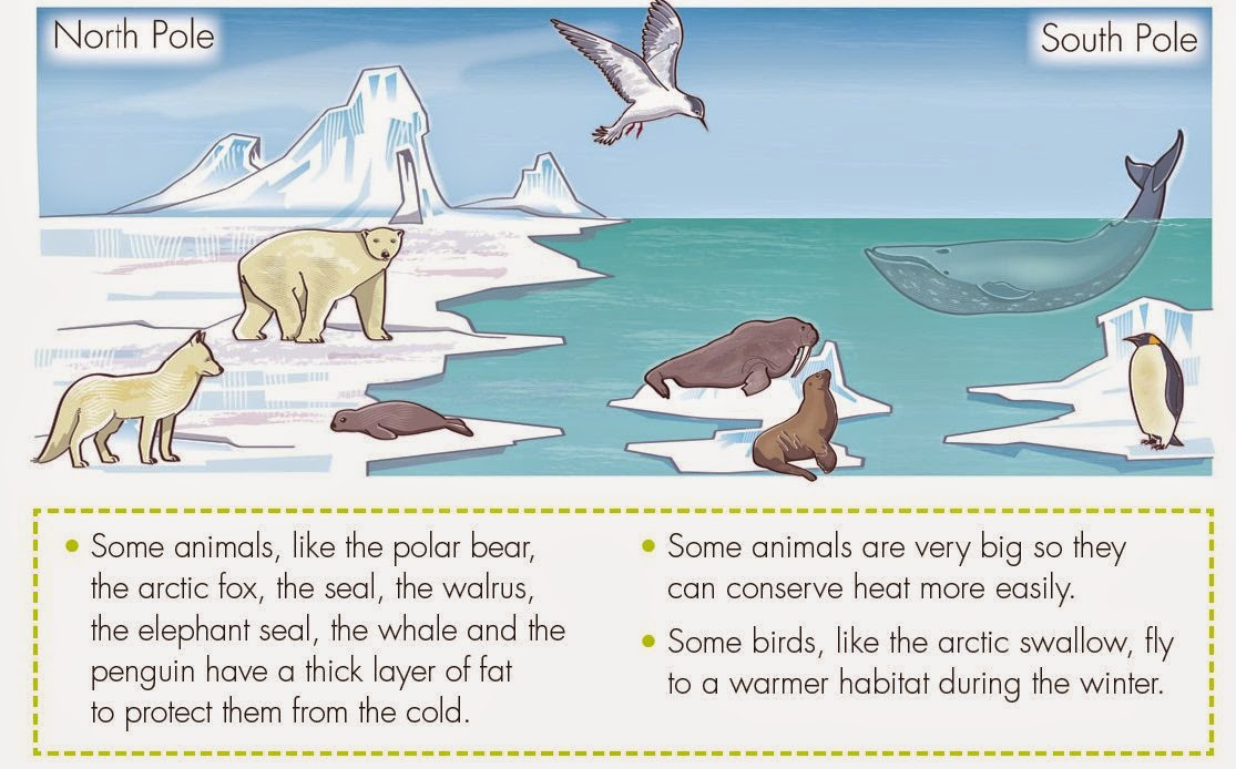 animals found in hot and cold region Answerscom wikianswers categories animal life cold region animals names and photos what animals live in cold and hot region arctic fox, arctic hare, arctic tern, caribou, and other animals are found in the arctic regions different animals would be found in other cold regions edit.