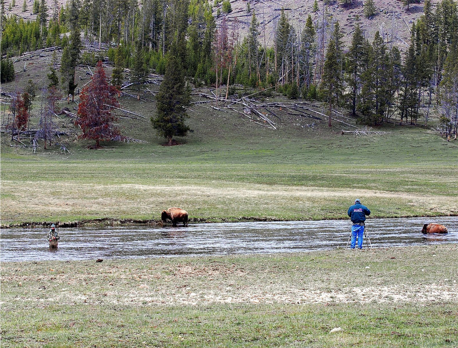 Fly fishing in yellowstone national park simple pleasures for Yellowstone park fishing report