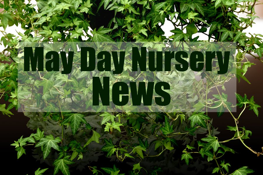 May Day Nursery News