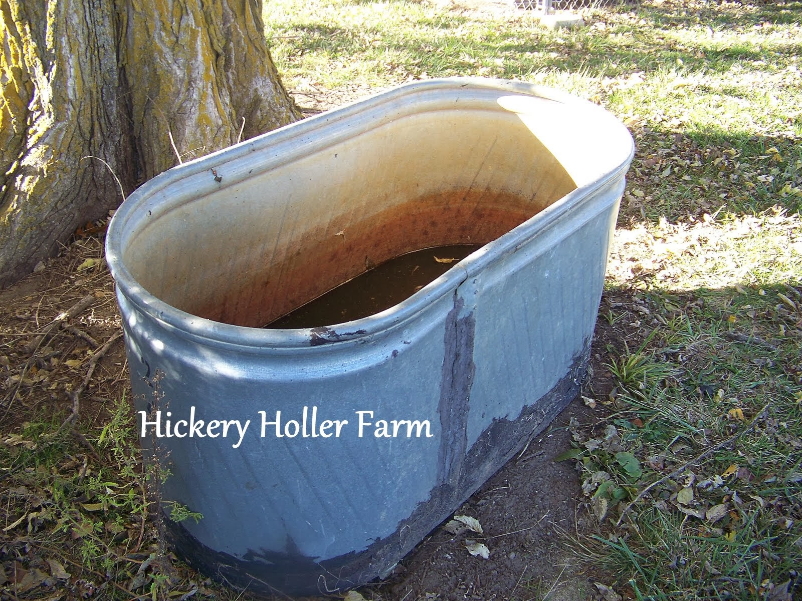 Hickery Holler Farm: Skinning A Turtle