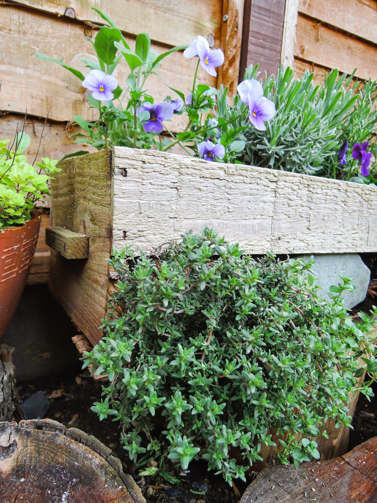 How to grow a herbs box