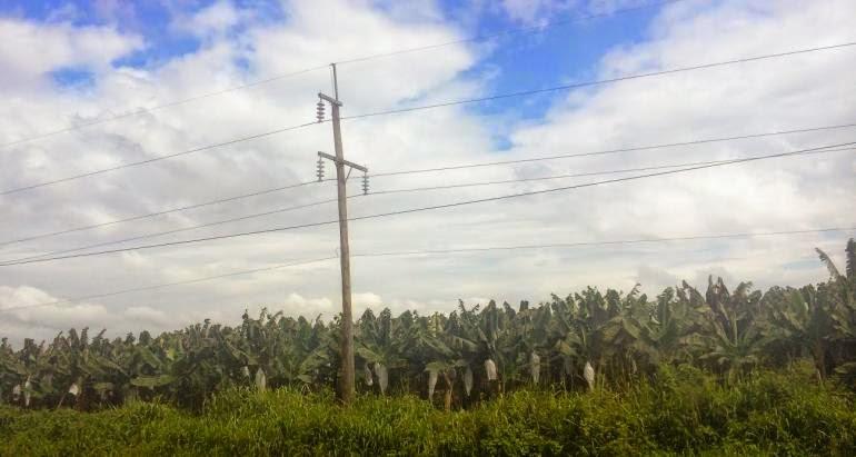cambio climatico, Olanchito, Honduras, cultivo de banano, sequias,