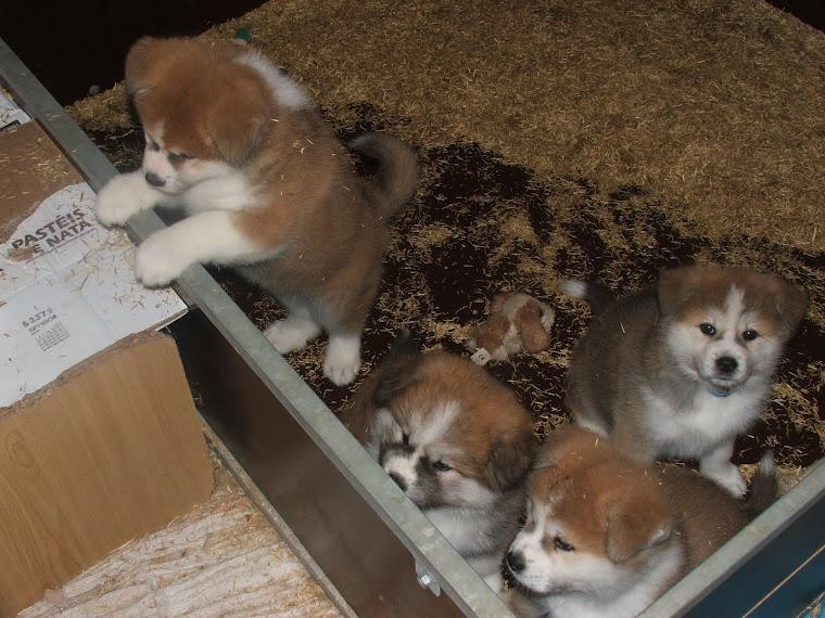 Tadahiro,Izumi,I' Yuki et Sakura derrière
