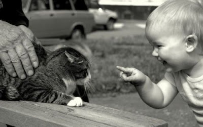 kucing comel kena buli