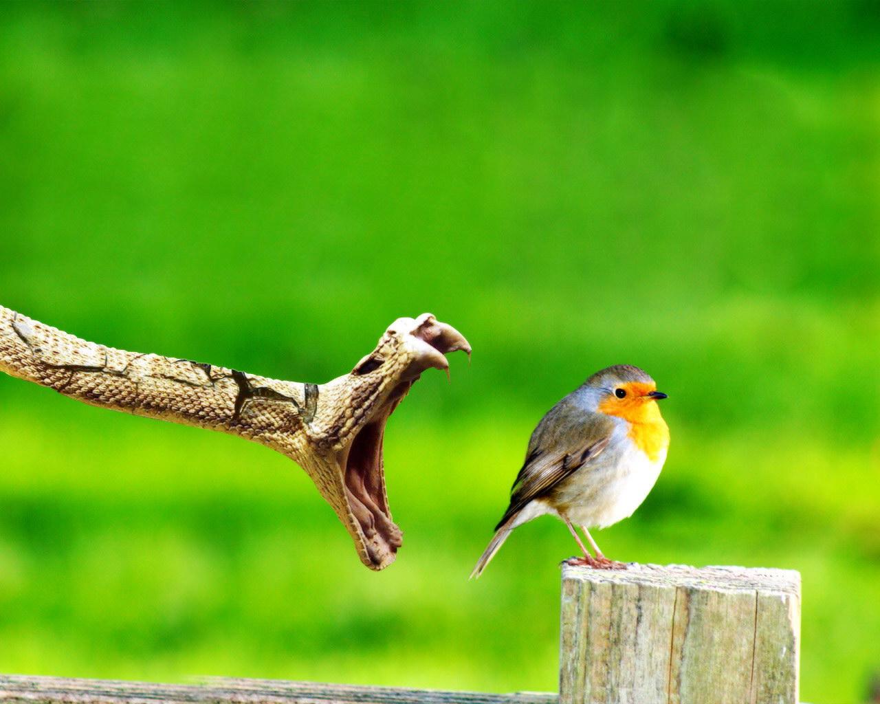 http://2.bp.blogspot.com/-7K1Dpnn6pcg/TgBNLFBXMgI/AAAAAAAABSI/dYh-G5VkGOk/s1600/Animals_Birds_Bird_and_snake_004698_.jpg