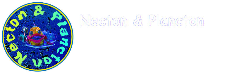 Necton e Plancton
