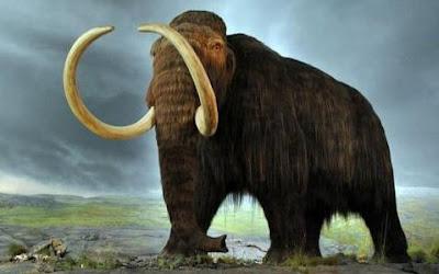 Rusia Bangun Laboratorium Untuk Kloning Mammoth