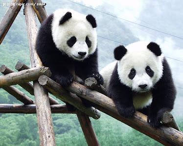 Two-Panda Tour