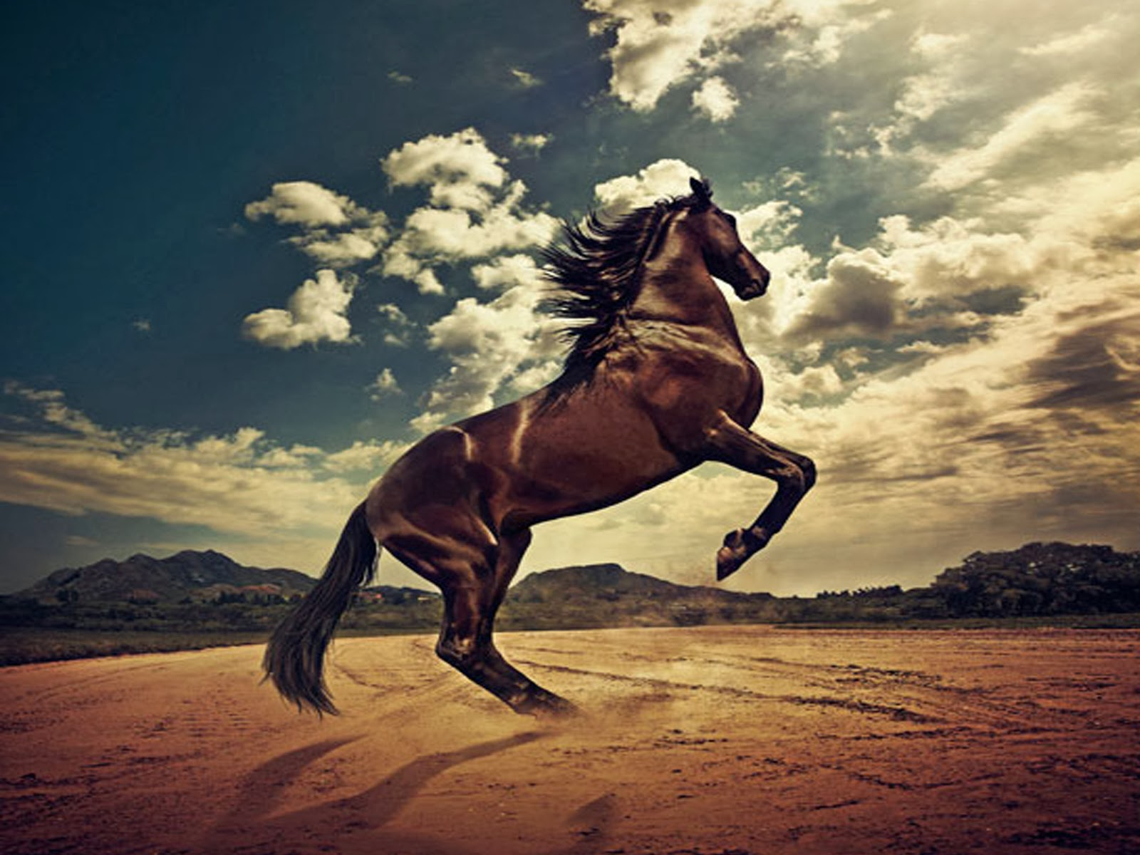 hd wallpapers desktop horse free