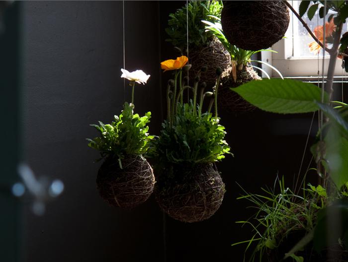 Jardin y Plantas 6