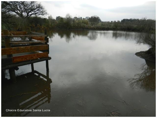 El muelle del tajamar chico vuelve a estar sobre el agua - Chacra Educativa Santa Lucía