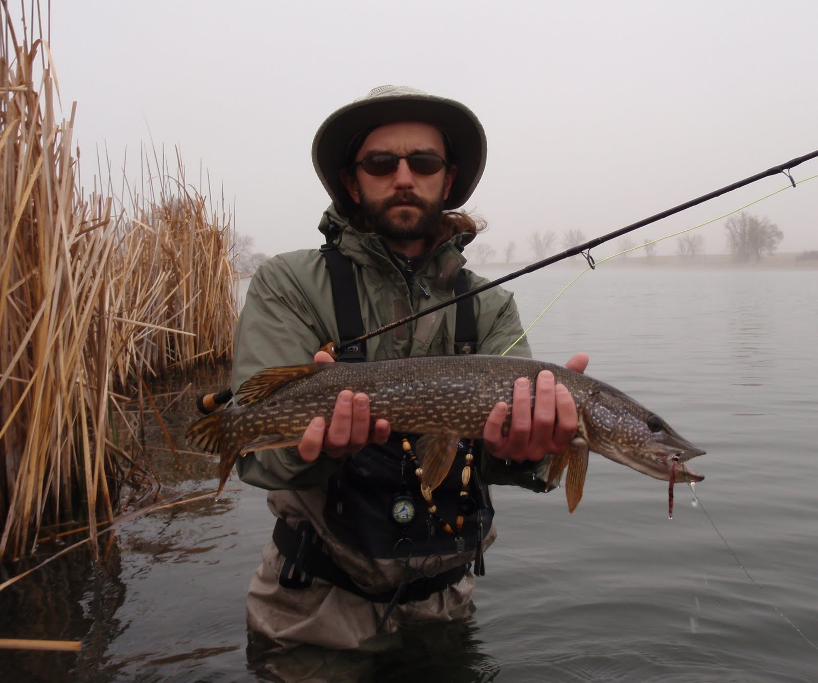 Colorado fly fishing reports northern pike get out of for Pike fishing alaska