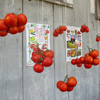 Red Fire Farm Tomato Festival_New England Fall Events