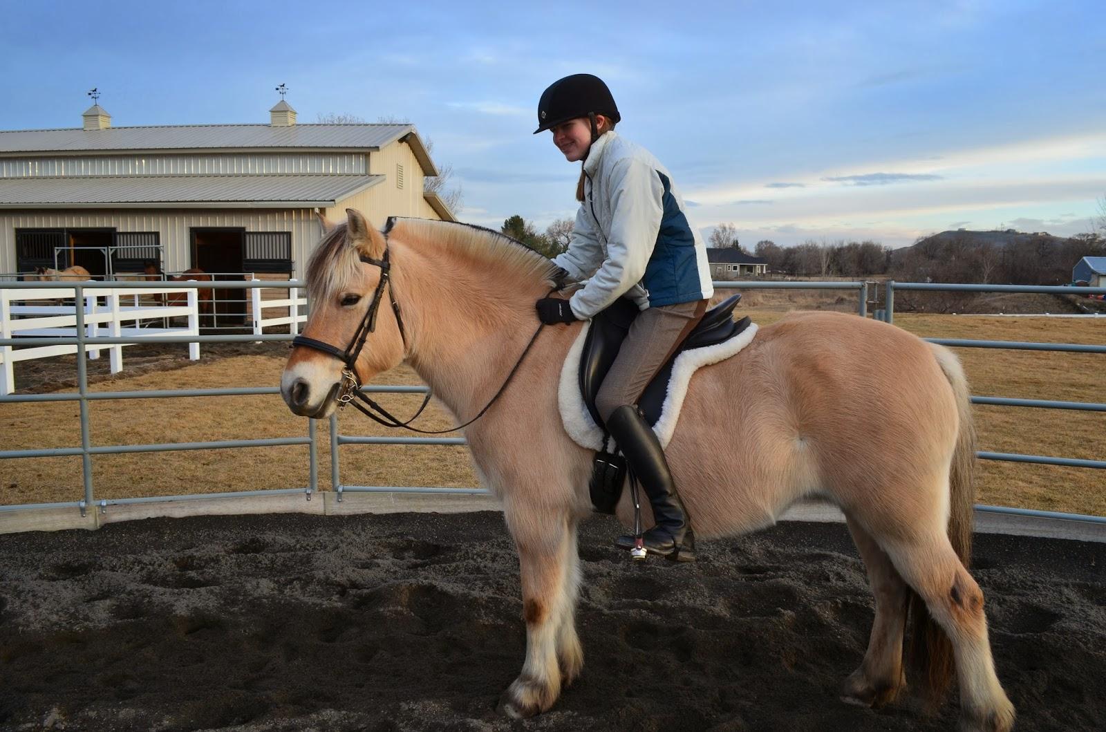 Dressage Fjord horse