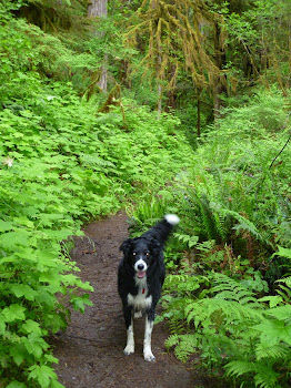 My Four Legged Trail Partner