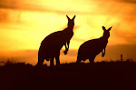AUSTRALIA - (progetto)
