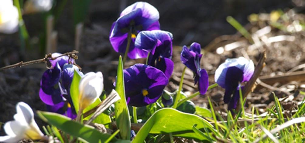 Sådan skaber du billigt forårsstemning i haven