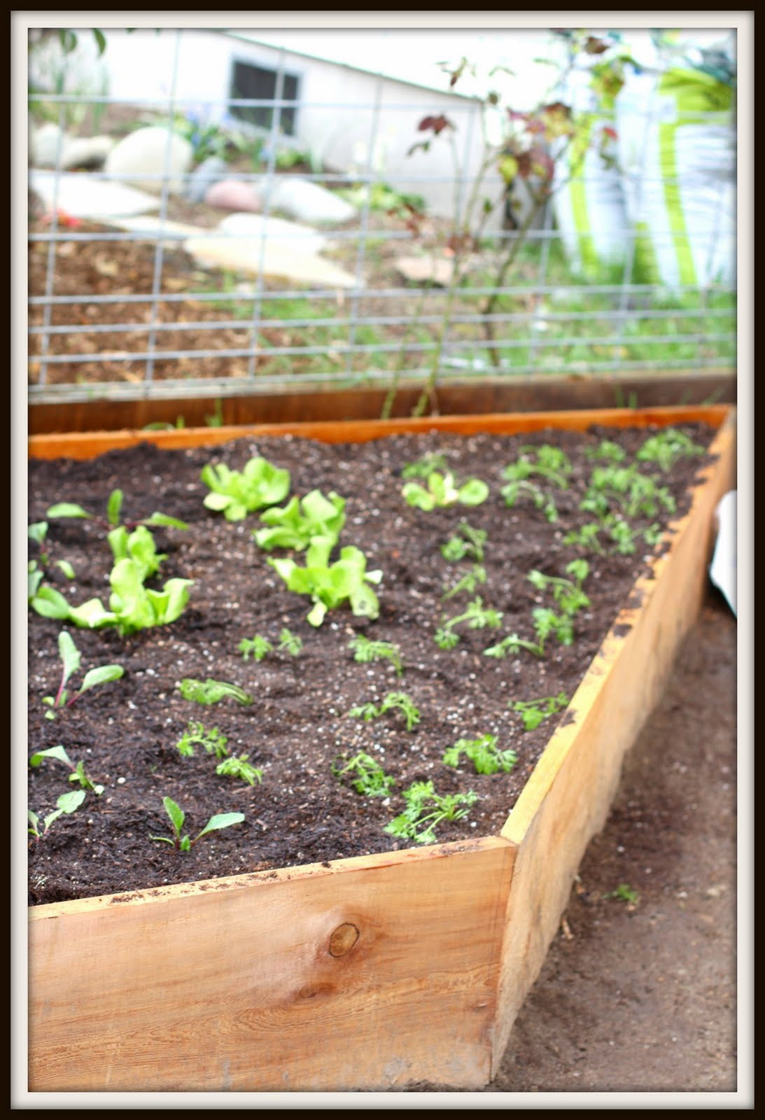 Raised Beds Without Boardsor Gardening