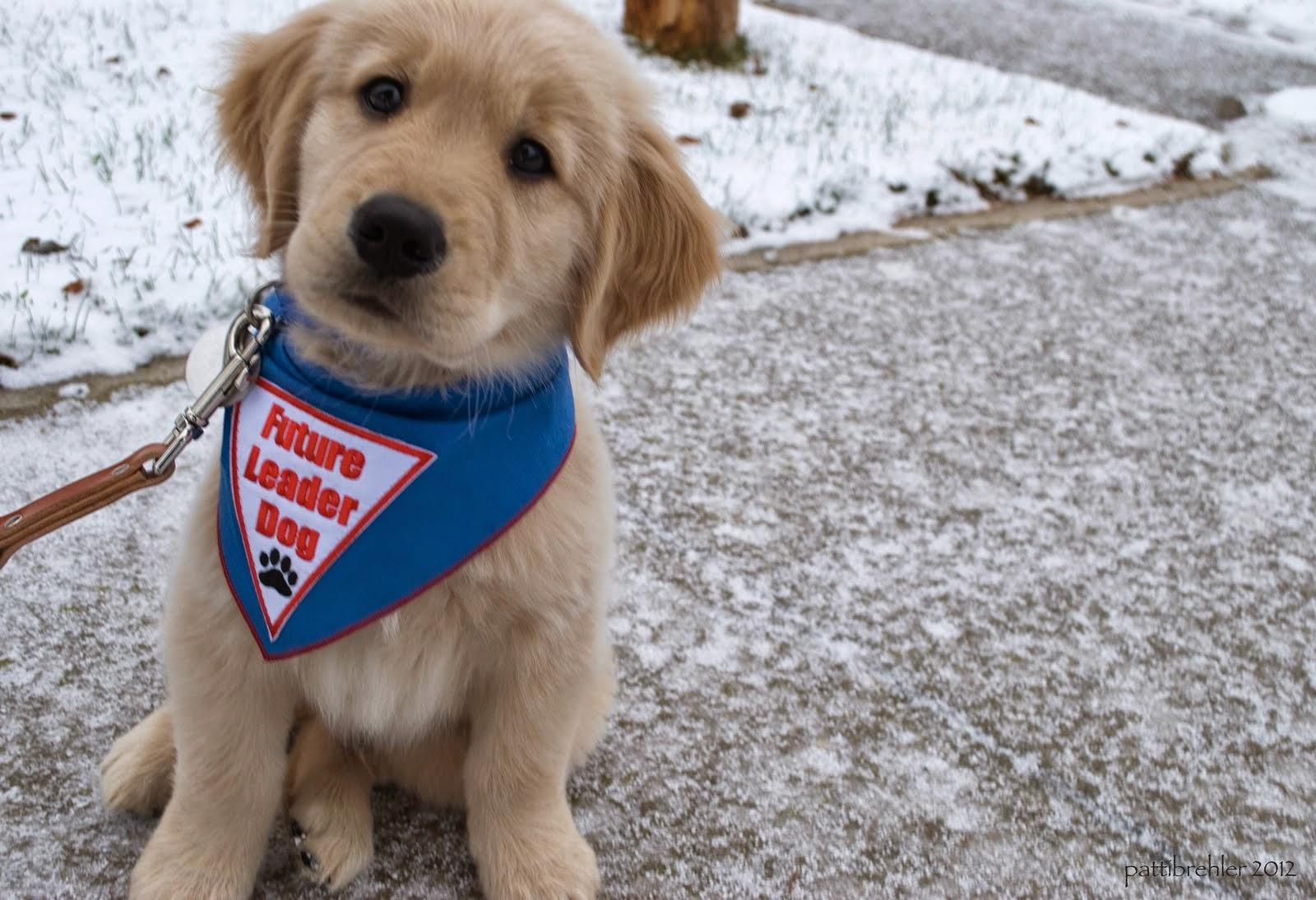 Resultado de imagen para perros guia cachorros