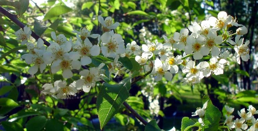 En blogg om frösådder och trädgårdsdrömmar.