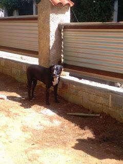 Το σκυλάκι της φωτογραφίας είναι από το πρωί στα Βριλήσσια σε οικοδομή. Είναι θηλυκό, φοράει καφέ λουράκι και οδηγό. Την ψάχνει κανείς?