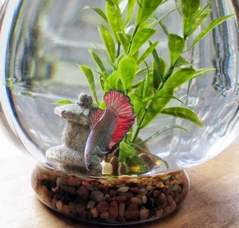 Betta vase plants peace lilly vase vases sale betta for Plant with fish in vase