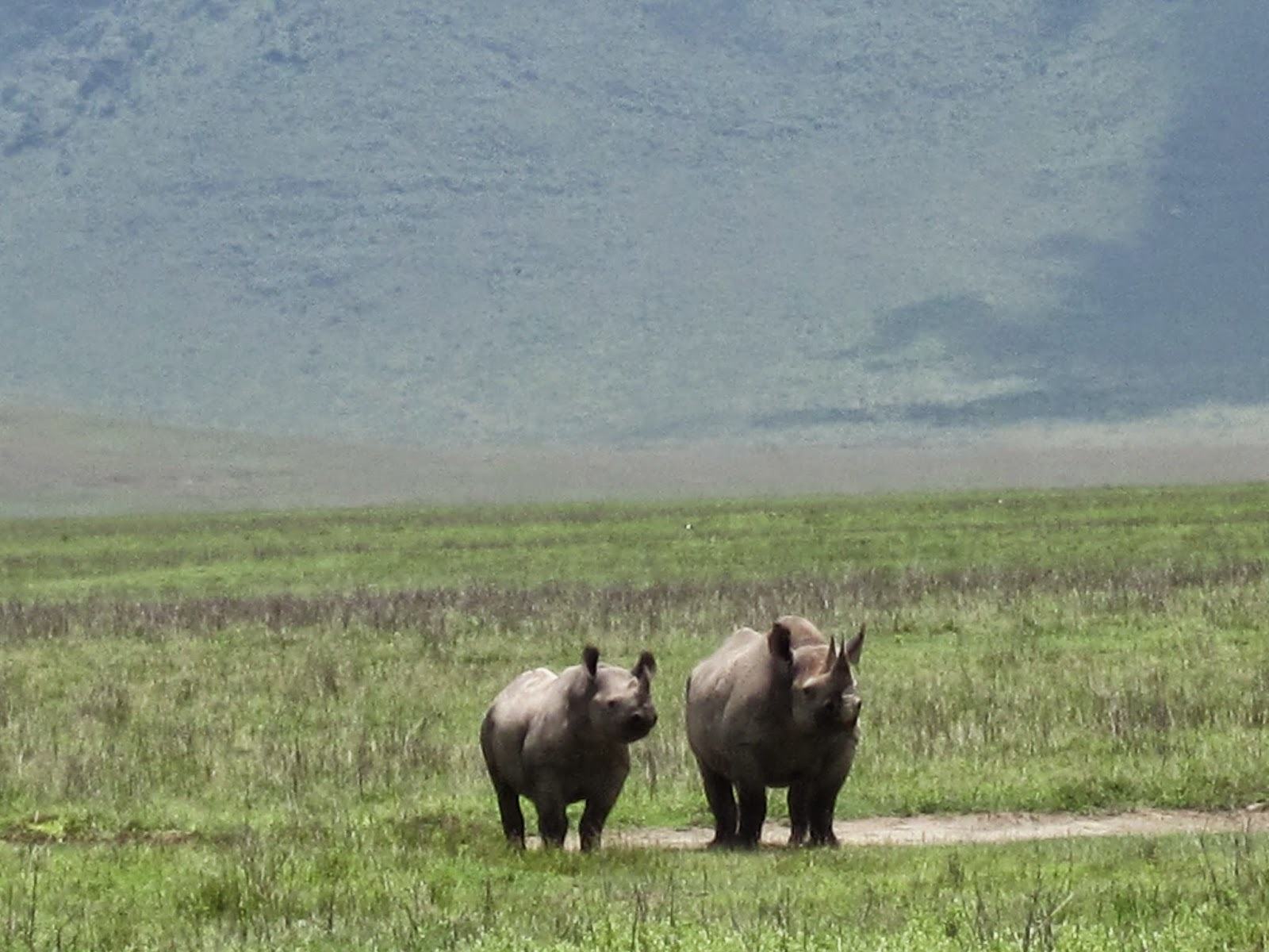 Caminatas, Caminatas y Paseos Safaris en África