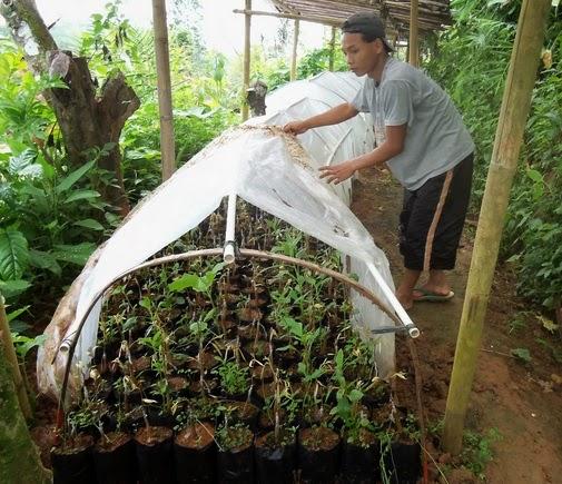 sungkup durian bambu